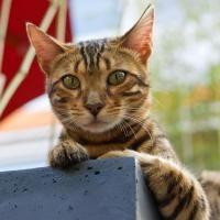 Come evitare che il gatto faccia pipì per casa