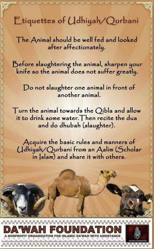 Etiquette of Qurbani