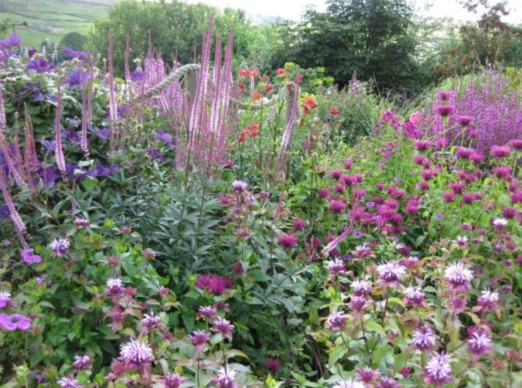 Herbaceous border at Scar Top