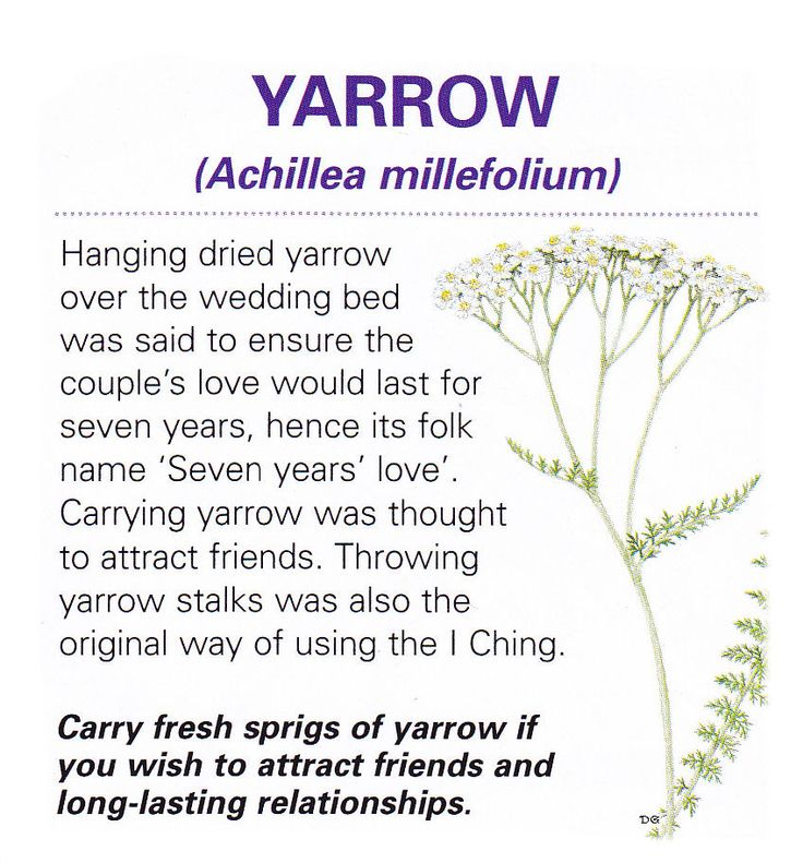 Now I know what to do with the yarrow plant I just bought...Magical herb yarrow
