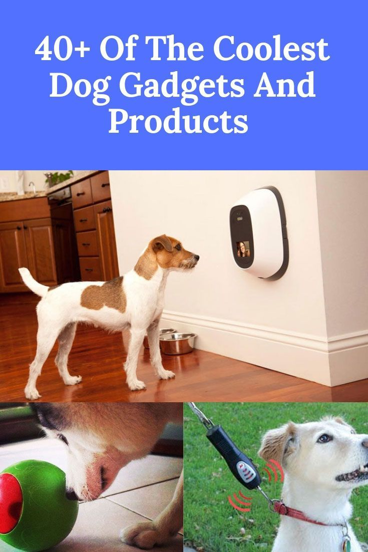 The Coolest Dog Gadgets Dog Gadgets Best Dogs Tough Dog Toys