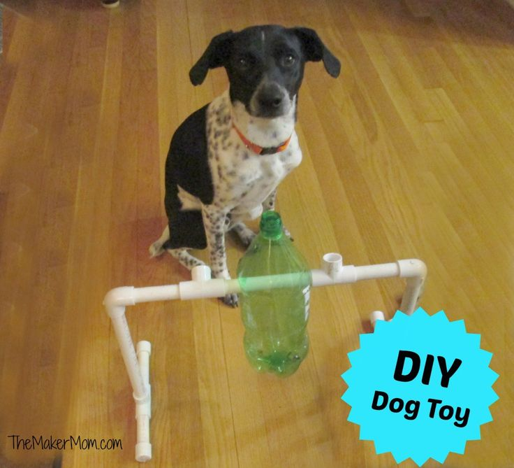 432 best dog images on pinterest dog toys pets and dog houses inspired by something he found online the young maker teen set out to build a dog treat dispenser that also a bit of a puzzle with a few basic supplies solutioingenieria Image collections