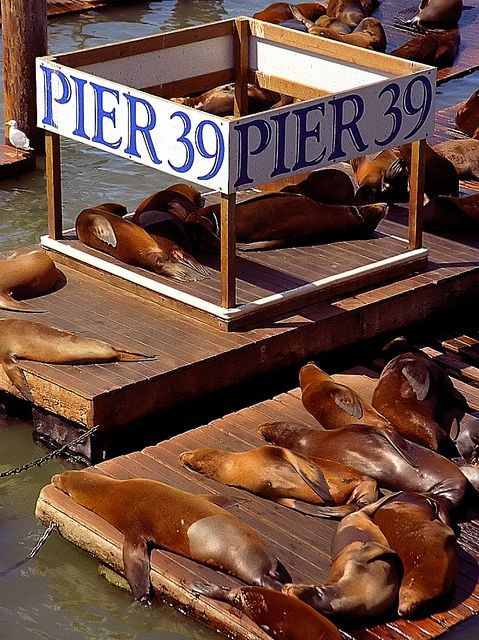 "San Francisco - Pier 39 ""Sealions Lounging"" by David Paul Ohmer, via Flickr"
