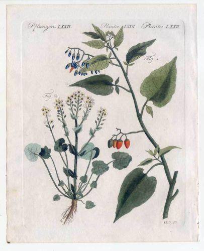 Bittersüß-Löffelkraut-Arzneipflanzen-Pflanzen - Bertuch-Kupferstich 1810 Medizin | eBay