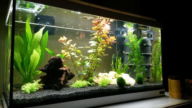 die besten 25 60 liter aquarium ideen auf pinterest aquascaping aquarium aquascape und betta. Black Bedroom Furniture Sets. Home Design Ideas
