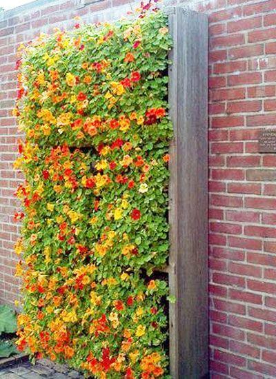 POUR ÉGAYER UN MUR : un tapis de fleurs accroché à un treillis