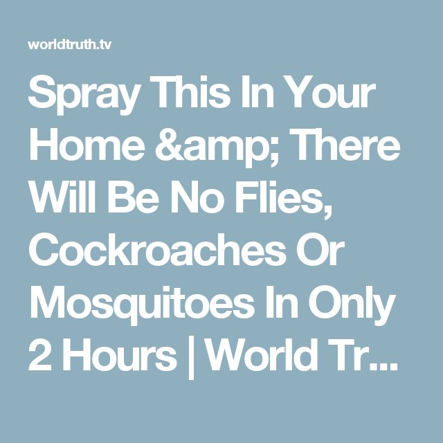 Spray This In Your Home & There Will Be No Flies, Cockroaches Or Mosquitoes In Only 2 Hours   World Truth.TV
