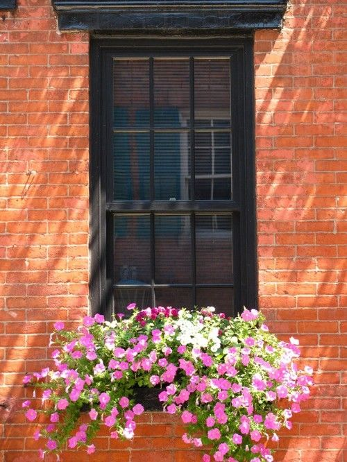 Janelas com Floreiras - Windows Boxes Flowers                                                                                                                                                     Mais