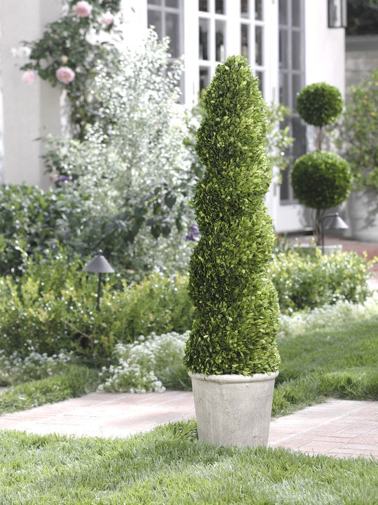 Beautiful Green Spiral Topiary Tree For House Decor: Beautiful Faux Plant From Zodax Tall Spiral Shaped Boxwood Topiary By OJ Commerce CH 2299