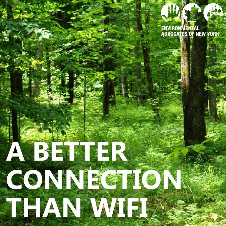 Connect with nature. Become an Environmental Advocate today! http://www.eany.org/get-involved