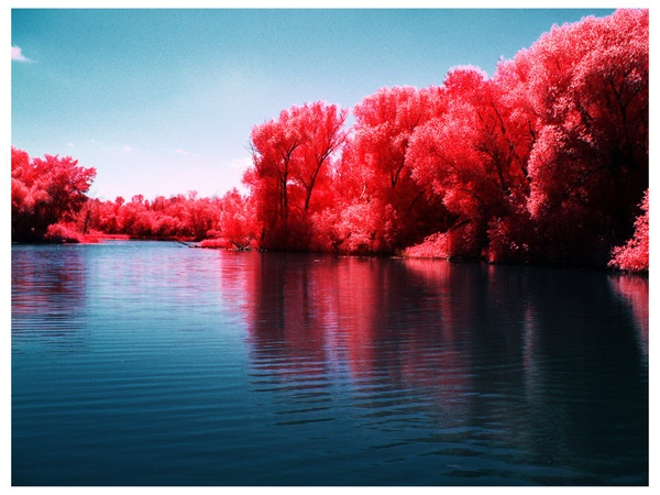 Infrared shots: Infrared Photos, Favorite Places, Nature, Color, Beautiful Places, Pink, Beautiful Photography, Pretty, Infrared Photography