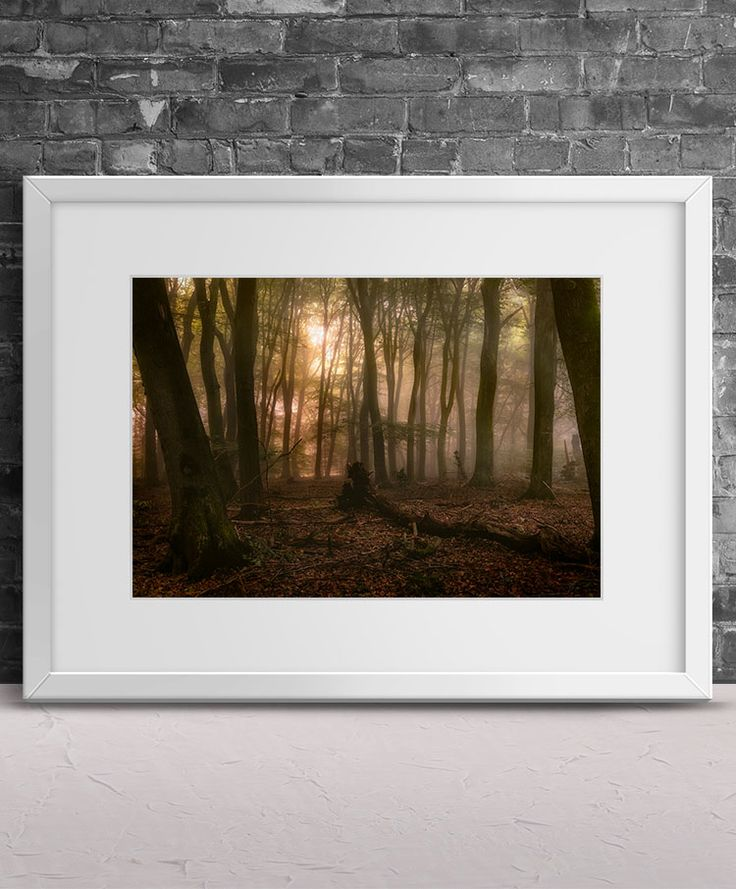 Forest of the Dancing Trees by Tim Abeln Photography and Digital Art Prints. Beautiful wall decoration for your home and office. Speulderbos forest is also known as the forest of dancing trees. With mist and low lighting the dark trees take the shapes of dancing witches and... #photography #interiordesign #landscape #canvas #artprint #homedecorideas #walldecor #homedecor #giftideas