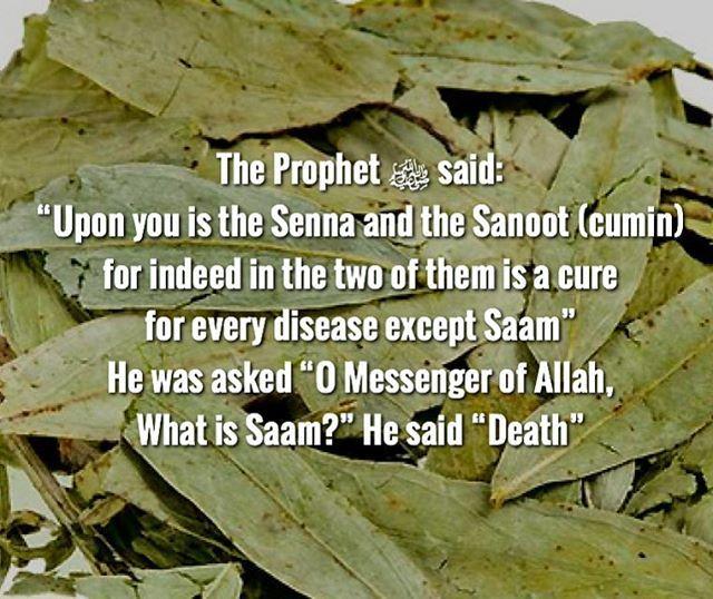 Reference: Ibn Maajah 3457; Shaykh Al-Albaani graded it saheeh. #senna…