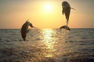 Fond ecran dauphin sur la plage, photo de dauphin