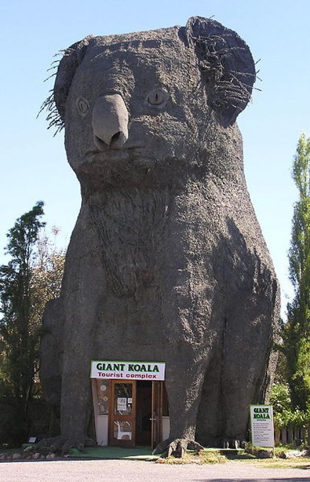 The Big Koala – Dadswells Bridge VIC