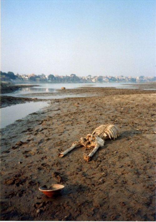 Río Ganges: horrorosa laguna de cadáveres humanos. El río Ganges es un lugar sagrado y puro, o por lo menos eso es lo que le dicen a los turistas. El río es un lugar donde los locales lavan los platos, la ropa y realizan su aseo personal, pero tambien realidad es un deposito de cadáveres, ya que los lugareños, al no tener el dinero suficiente para entierros o cremaciones, arrojan a sus familiares muertos al río.