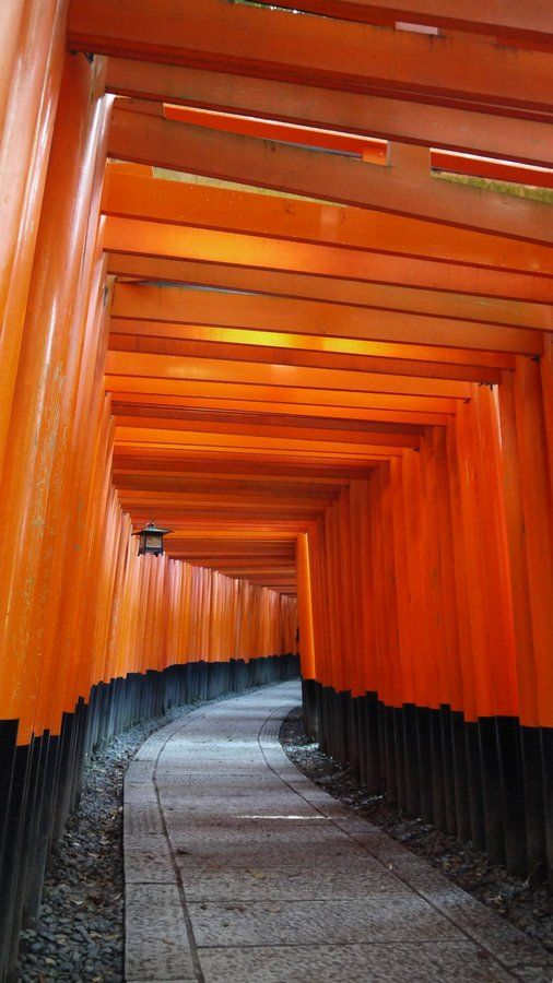 Fushimi-inari in Kyoto, Japan. Japan travel tips on http://ajourneyintotheunknown.com/things-1-month-japan-itinerary/.