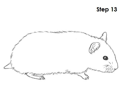 how to draw a hamster video