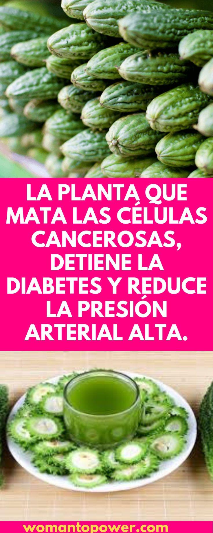 La planta que mata las células cancerosas, detiene la diabetes y reduce la presión arterial alta. – Recetas caseras