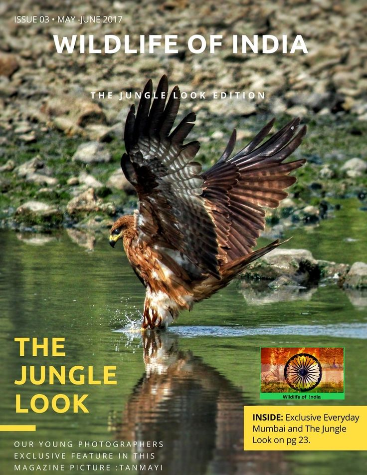"""Enjoy the Beauty of Wildlife of India Exclusive Edition You will Find """"Everyday Mumbai"""" Section in it ."""
