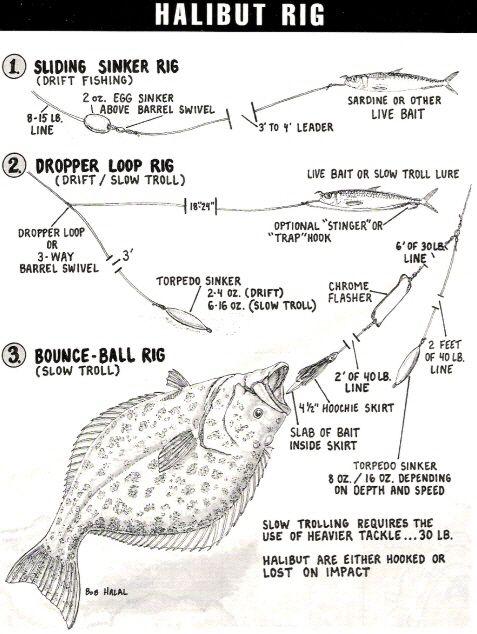 halibut rig diagram shark rig diagram