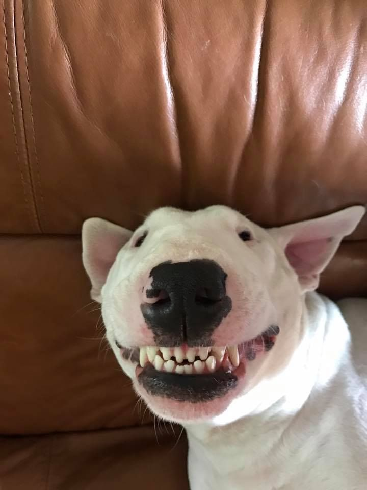 Can You Train A Dog To Smile