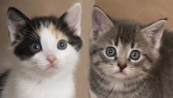 Calico And Tabby Mixed Cat For Adoption In Chicago Illinois Frida And Smokey In Chicago Illinois In 2020 Cat Adoption Calico Cat Cats