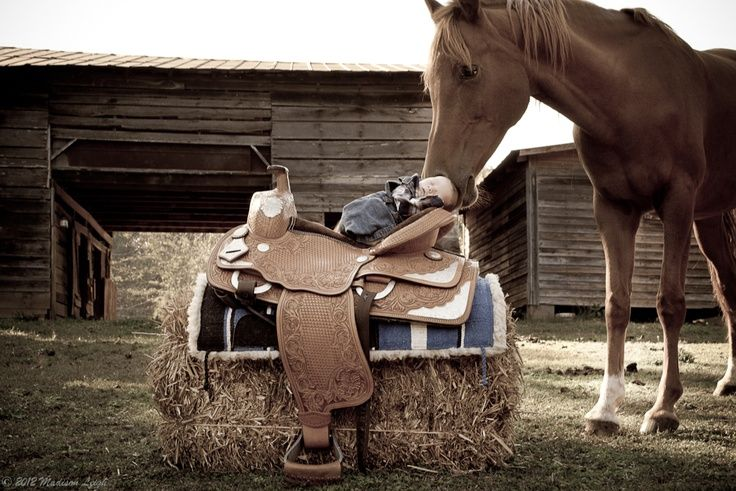 newborn baby pictures with horses - Google Search