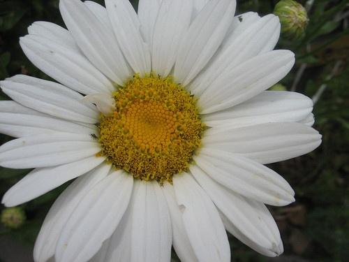 Flower Garden Ideas Colorado 17 best images about garden-colorado on pinterest   gardens