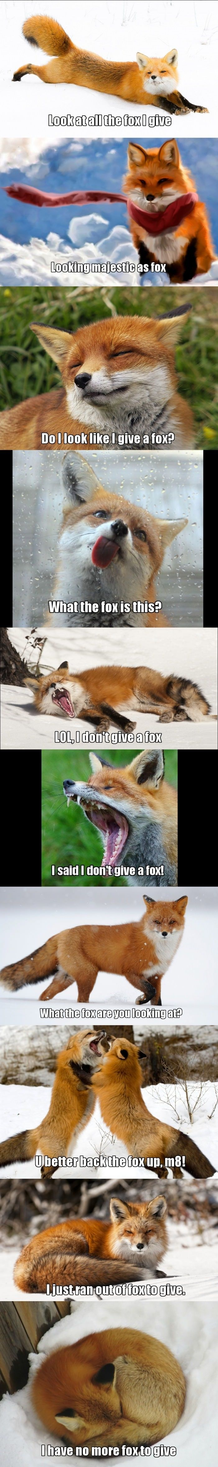 Look at all the fox I give