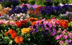 Brighten Your Yard with Flowers  http://mrlandscaper.ca/brighten-your-yard-with-flowers/
