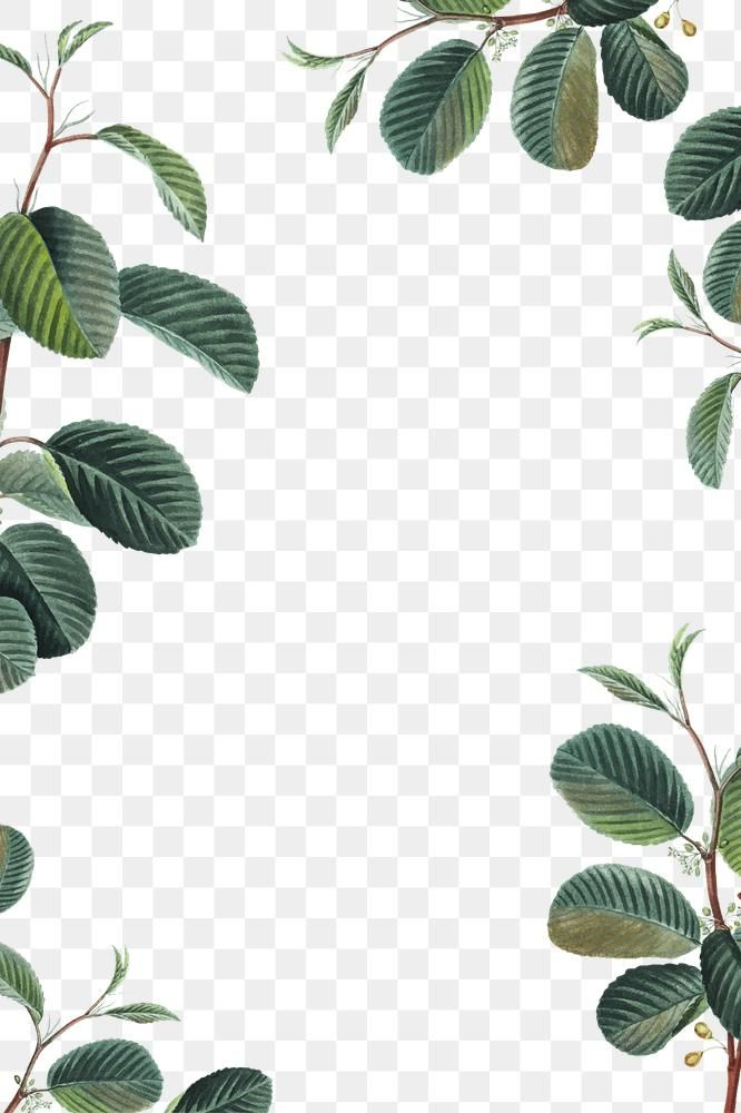 Download Premium Png Of Png Green Leaf Frame Border Hand Drawn In 2020 Flower Frame How To Draw Hands Background Design