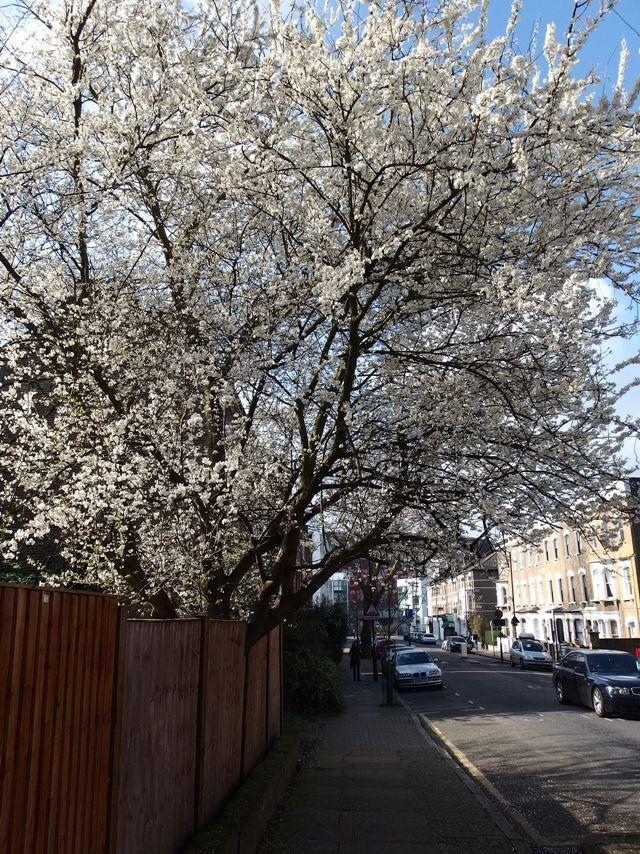 Blossom Tree London
