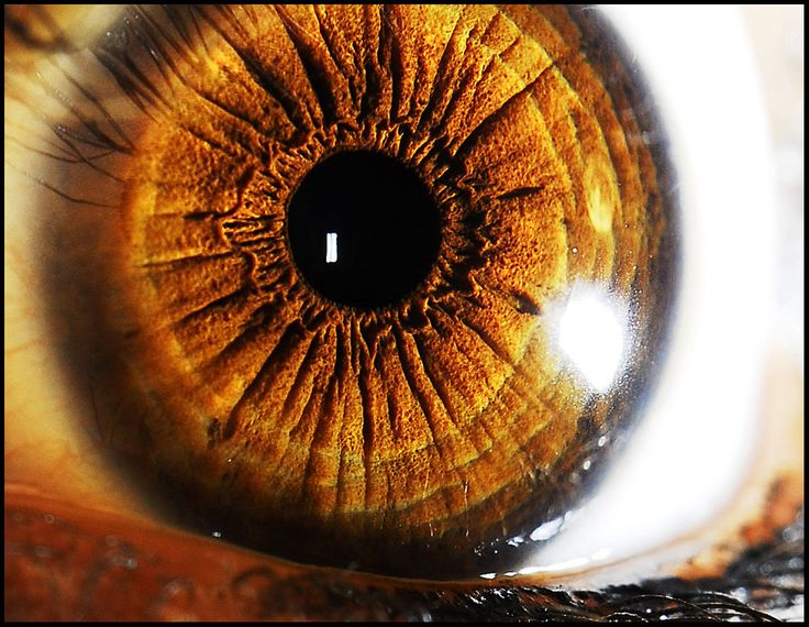35 best images about Eyes on Pinterest | Eye close up ...