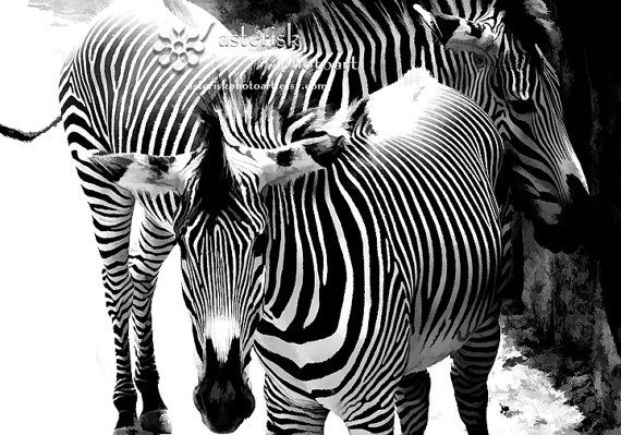 Two Zebras 8 X 10 photo fine art photographic by AsteriskPhotoart, $30.00
