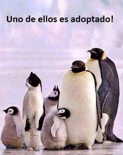 Uno de ellos es adoptado