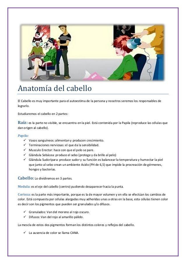 Anatomía del cabello  El Cabello es muy importante para el autoestima de la persona y nosotros seremos los responsables de  ...