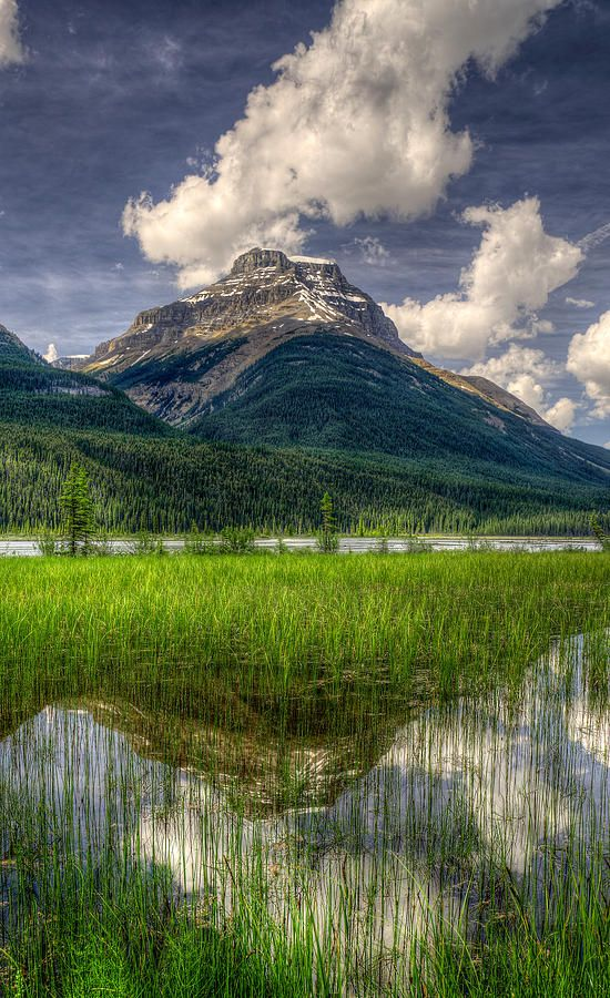 Mount Avery Reflected in Saskatchewan River Flats. Banff National Park, Canada