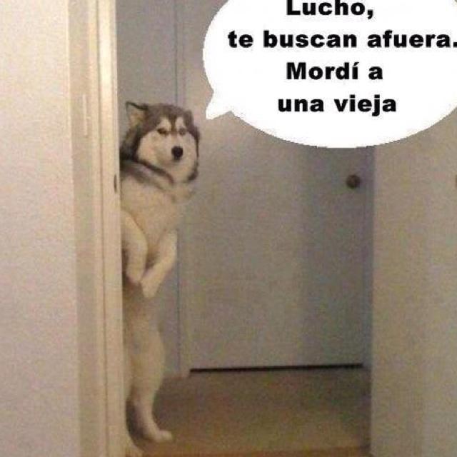 Asi es mi perro!