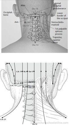 Du-16-Palace-of-Wind-FENGFU-Acupuncture-Points-1.jpg 358×648 pixels