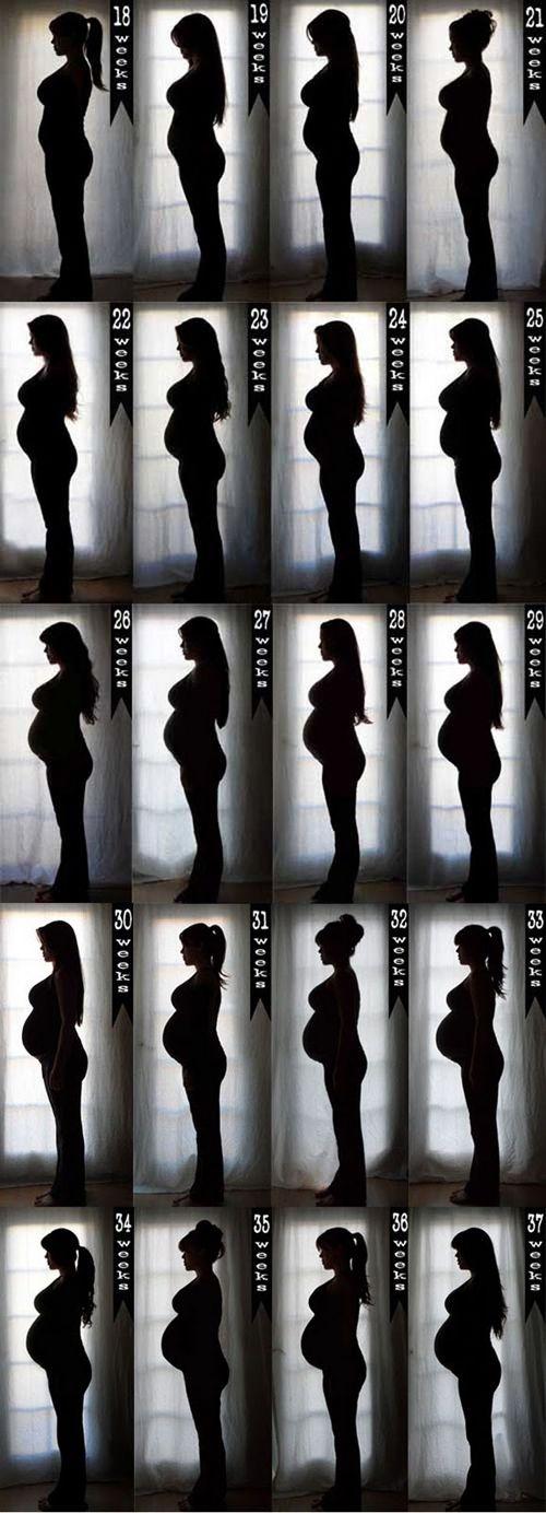Fotos de etapas del embarazo / Fotos de fases da gravidez/ Pregnancy photos #pregnancy #embarazo #gravidez