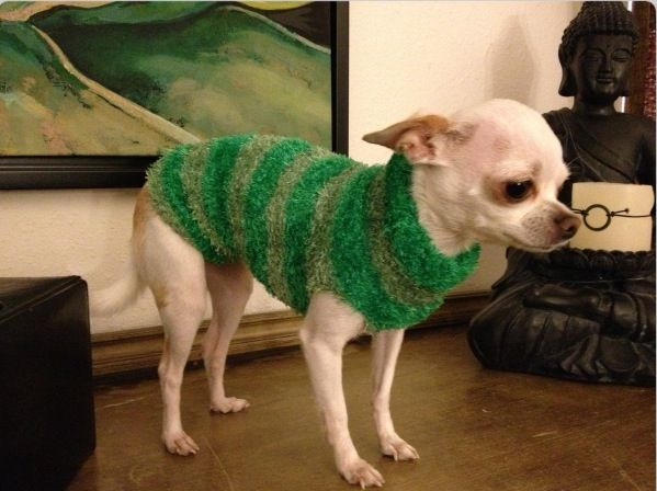 Sweater For A 3 Pound Chihuahua Cut The Foot Portion Off Of