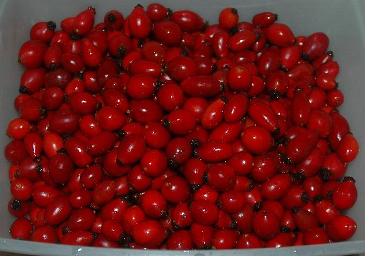 Rosehip syrup (non processed) recipe