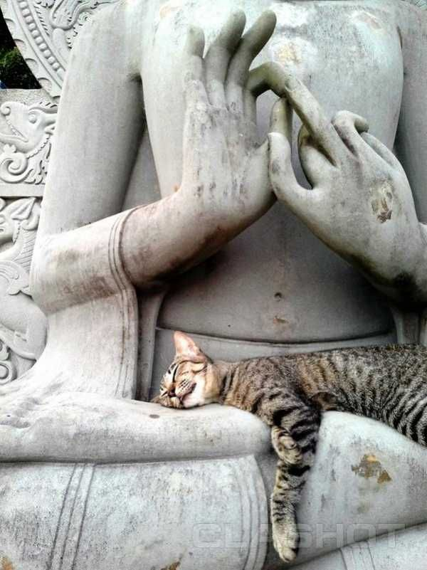 While humans seek enlightenment on the way to nirvana, these cats seen sleeping in the laps of Buddha statues seem to be seeking a warm place to chill out.