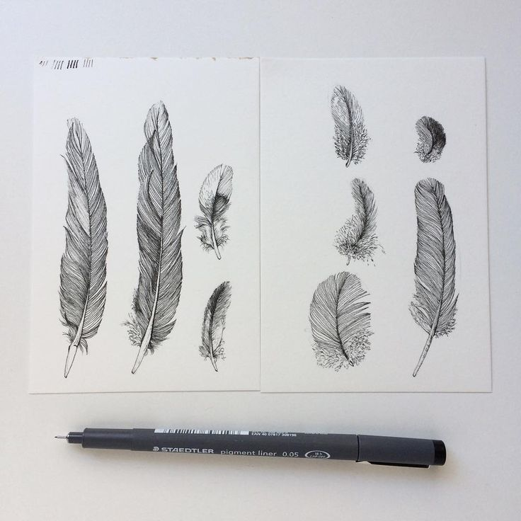 Ink feather sketches by Zoya Makarova Paper: Awagami Factory printmaking bamboo paper Pen: Staedtler pigment liner 0.05