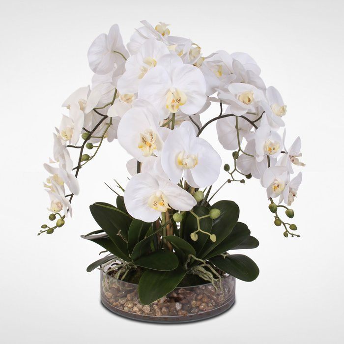 Phalaenopsis Orchid And Vanilla Grass Bush Floral Arrangement In