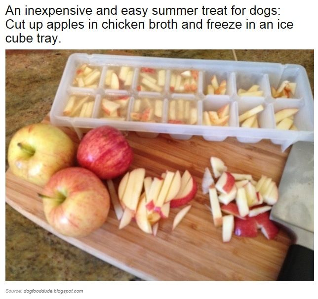 Dog treats: cut up apples frozen in water or broth in an ice cube tray.