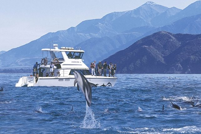 Kaikoura Swim with and Viewing Dolphins Dolphin Encounter has been operating tours to swim with the dolphins since 1989/1990 and interacting with the dolphins in their natural environment this is a truly unique opportunity. We are committed to ensuring that the experience you have with us is memorable and inspiring. Whether it is swimming with or watching the dolphins you will be impressed by the grace and beauty of these magical marine mammals.
