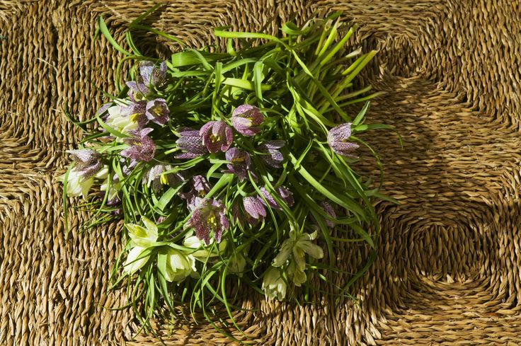Frittilaria flowers on the carpet | flores frittilaria en la alfombra
