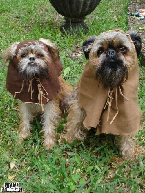 Ewoks! : Puppies, Dresses Up, Halloween Costumes, Dogs Costumes, Stars War, Shihtzu, Pet Costumes, Shih Tzu, Starwars